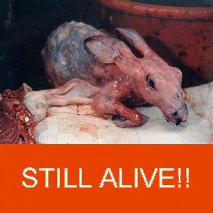Rabbits skinned alive in China