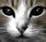 cat_portrait_by_oo_lacrima_oo-d2xgoug