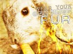 Wear_Your_Own_Damn_Fur_by_animal_rights_club