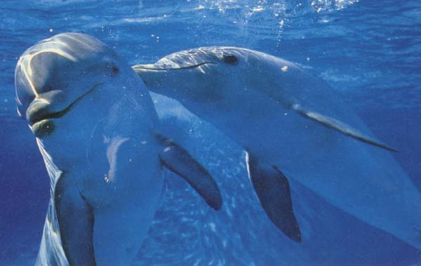 save the dolphins essay Dolphin scholarship  essay transcript  drag a college here to save it to your list.