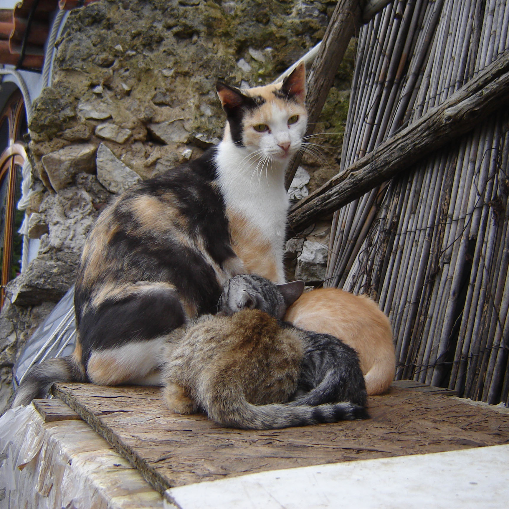 Feral Cat Had Kittens