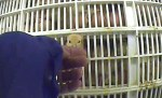 Coming up for air: This little chick's head was poking out of a crate