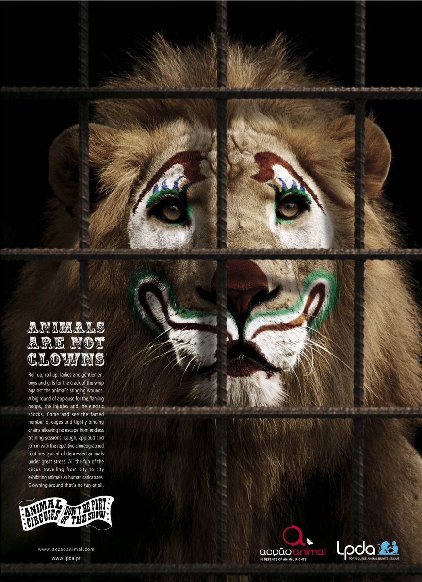 the mistreatment of circus animals essay