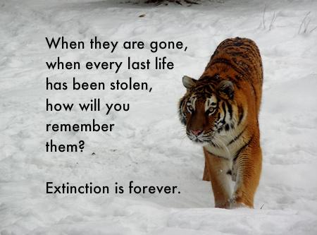An animal which is under threat of extinction essay