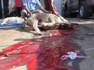 Streets run red with blood - Austaralian sheep slaughter in Kuwait - Eid Nov 2010