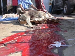 Streets run red with blood - Austaralian sheep slaughter in Kuwait - Eid Nov 2010