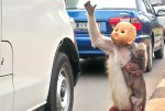 image-3-for-street-monkeys-abused-and-humiliated-a-sunday-mirror-investigation-gallery-629825987
