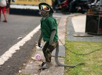 image-5-for-street-monkeys-abused-and-humiliated-a-sunday-mirror-investigation-gallery-104937102