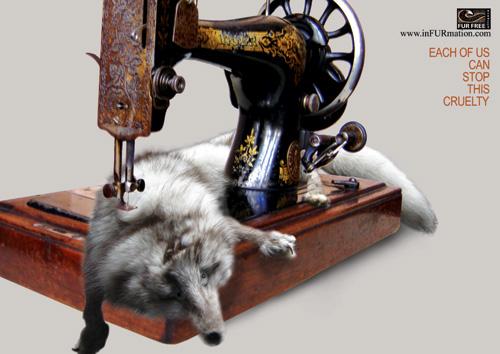 killing animal for fur essay