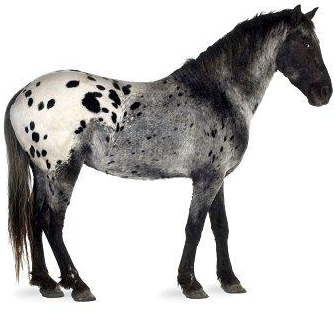 Usda Does Not Expect Horse Slaughter To Resume In The
