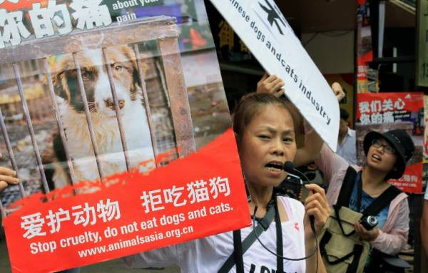 Animal rights activists protest against eating dog meat outside a dog meat restaurant in Yulin, southwest China's Guangxi province on June 21, 2013. Picture: CHINA OUT AFP PHOTO