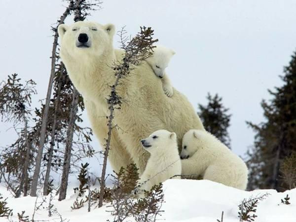 baby_animals_29