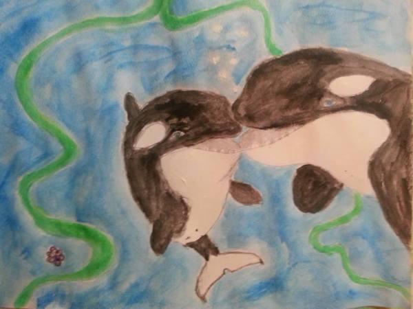 orcas-dream