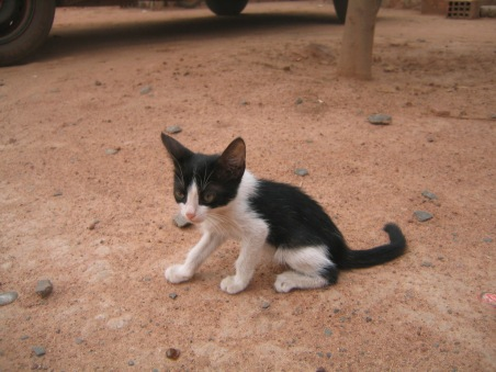 Kitten_in_Sibi_Mali_20-05-05