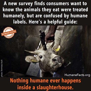 Nothing-Humane-in-a-slaughterhouse-meme